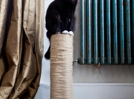 How a DIY cat tree makes your cat happy