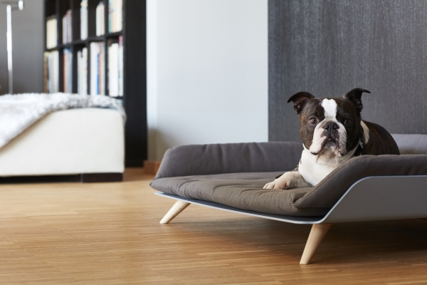 Dog sofa couch with cushion metal frame wood 2