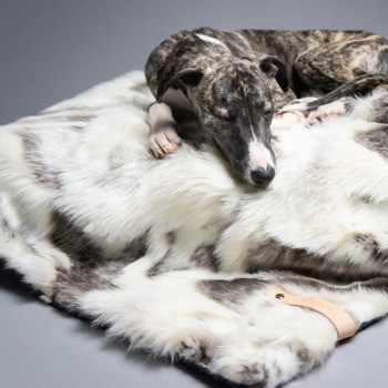 Two-tone faux fur dog blanket TÖSSE