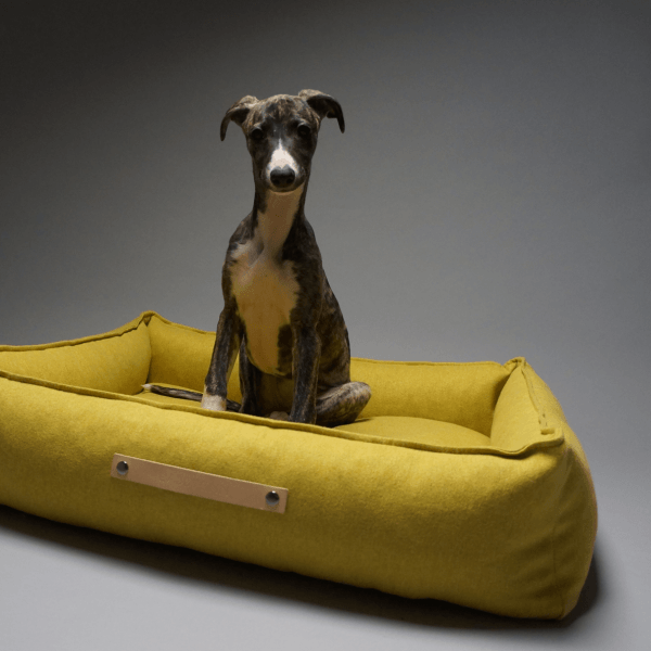 Durable designer dog bed bright yellow