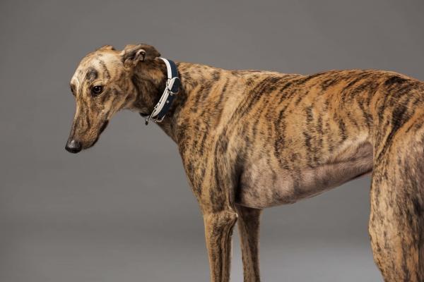 Luxurious dog designer leather walking accessories 55