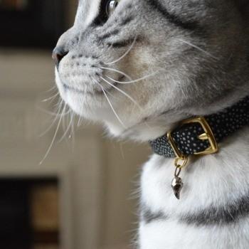 Brass cat collar charm RAVEN
