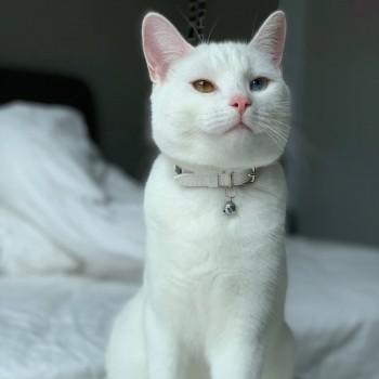 Cat collar gift tin WHITE RABBIT