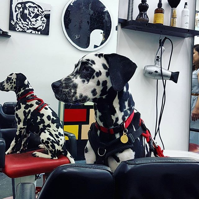 This is London's most dog-friendly hairdresser