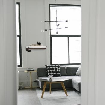 Make them Roar designer cat shelf safe vertical wall space for cats 14
