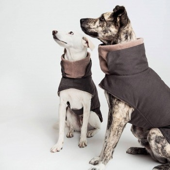 Graphite waterproof dog jacket