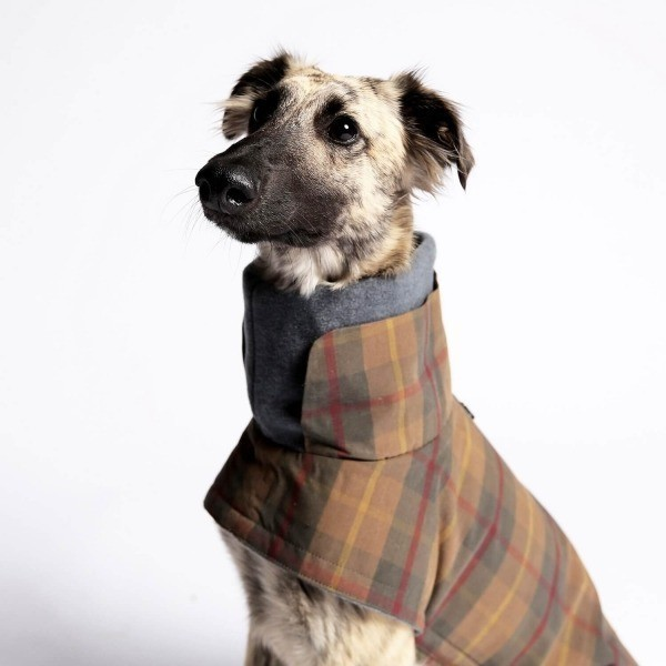 Tartan waterproof dog jacket 2