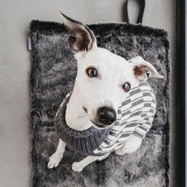 MiaCara Cosmo faux fur dog travel bed