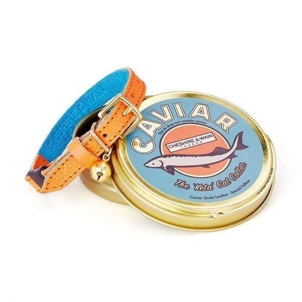 Orange leather collar with bright blue lining Keta
