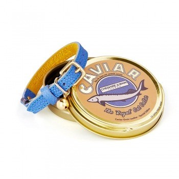 Blue leather collar with yellow lining Royal
