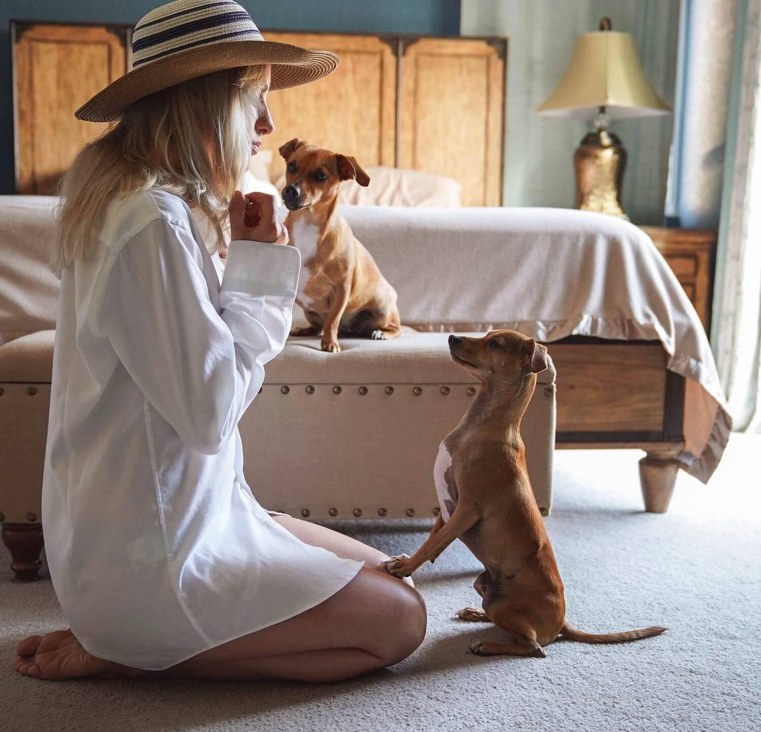 6 travel trends you and your dog should know about in 2019