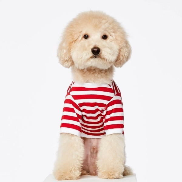 Red Breton t-shirt for dogs DAVID