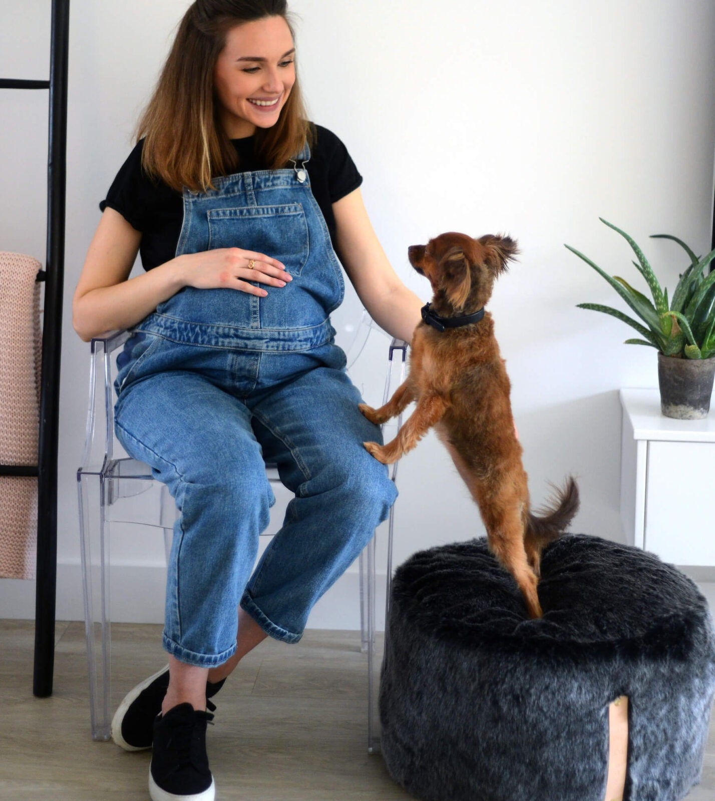 Introducing a new hygge dog collection made in London
