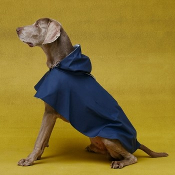 Blue waterproof dog rain cape William
