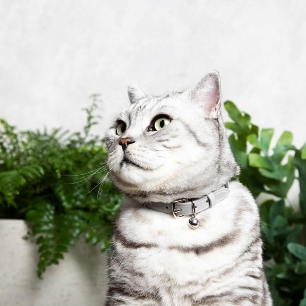 Luxury leather cat collar 1