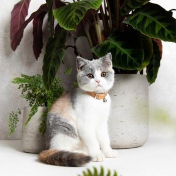 Luxury leather cat collar 4