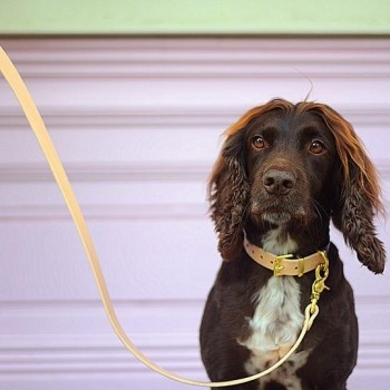 Leather two-tone dog lead BEIGE & BLACK