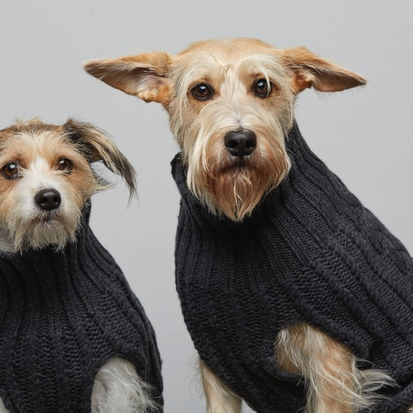Anthracite cashmere & merino wool knitted dog jumper JOHN B