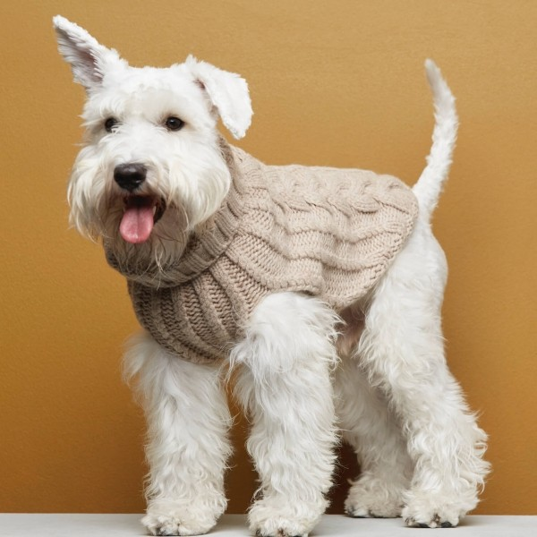 Beige cashmere & merino wool knitted dog jumper JOHN B