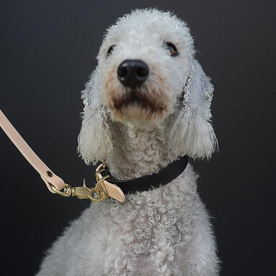 Leather two-tone dog collar BEIGE & BLACK