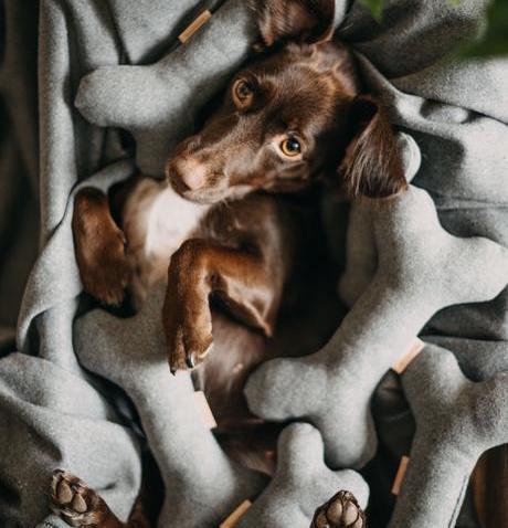 Squeaker dog toy BONE