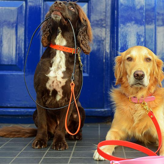 Leather two-tone dog lead ORANGE & NAVY