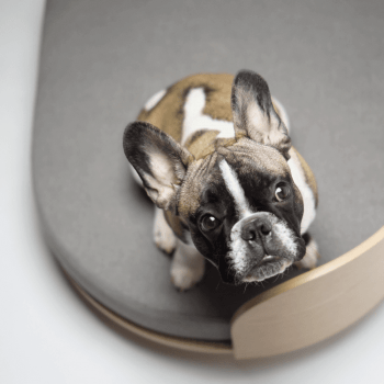 Luxurious dog sofa LOUE