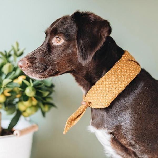 Adjustable dog bandana TORI