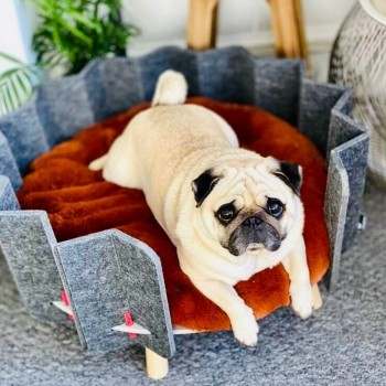 Recycled PET felt pet bed BISCUIT